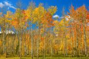 Lightning Fine Art Posters Framed Prints - Colorful Colorado Autumn Landscape Framed Print by James Bo Insogna