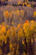 Lightning Wall Art Prints - Colorful Colorado Autumn Landscape Vertical Image Print by James Bo Insogna