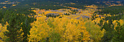 Autumn Prints Prints - Colorful Colorado Peak to Peak Autumn Scenic View Panorama Print by James Bo Insogna