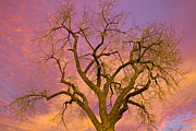 Photography Abstracts Prints - Colorful Cottonwood Pastel Sunset Print by James Bo Insogna