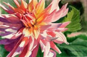 Watercolor  Paintings - Colorful Dahlia by Sharon Freeman