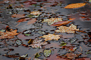 Nature Center Pond Prints - Colorful Dew Drops Print by LeeAnn McLaneGoetz McLaneGoetzStudioLLCcom
