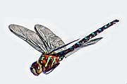 Wet Fly Prints - Colorful Dragon Print by Don Mann
