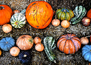 Harvest Art Prints - Colorful Fall Harvest Print by David Lee Thompson