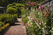 Hollyhocks Photos - Colorful flower garden by Elena Elisseeva