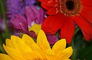 Colorful Flowers Print by Liz Vernand