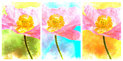 Happy Photo Framed Prints - Colorful Flowers Triptych Framed Print by Carol Leigh