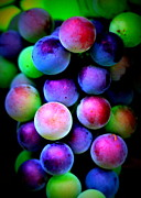 Greens Framed Prints - Colorful Grapes Framed Print by Carol Groenen