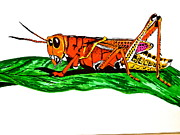 Burnt Drawings - Colorful Grasshopper by Erika Butterfly