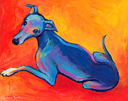 Pet Portrait Drawings Framed Prints - Colorful Greyhound Whippet dog painting Framed Print by Svetlana Novikova