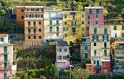 Trattoria Framed Prints - Colorful Houses - Manarola Framed Print by Donna Lee Blais