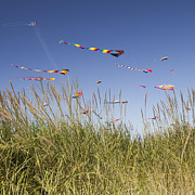 Multi-coloured Framed Prints - Colorful Kites Flying At Beach Framed Print by Bryan Mullennix