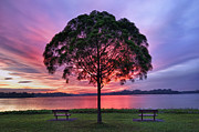 Reflection In Water Posters - Colorful Light Seen Behind Tree Poster by Pang Tze Ru