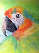 Parrot Pastels Prints - Colorful Man Print by Stephanie L Carr