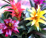 Perennials Painting Posters - Colorful Mixed Bromeliads Poster by Elaine Plesser