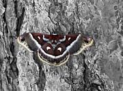 James Steele - Colorful Moth