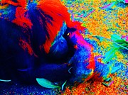 Orangutan Digital Art Metal Prints - Colorful Orangutan Metal Print by Jasna Gopic