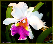 Gardener Mixed Media - Colorful Orchid Photo by M C Sturman