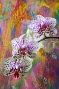 Pinks Posters - Colorful orchids Poster by Garry Gay