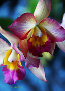 Kerri Ligatich Prints - Colorful Orchids Print by Kerri Ligatich