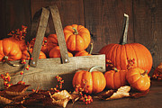 Harvest Photos - Colorful pumpkins with wood background by Sandra Cunningham
