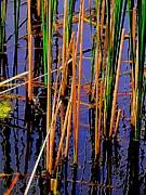 Colorful Reeds Print by Beth Akerman