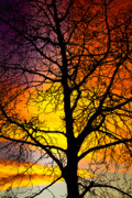Sunset Greeting Cards Prints - Colorful Silhouette Print by James Bo Insogna
