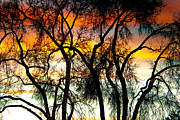 Photography Abstracts Prints - Colorful Silhouetted Trees 10 Print by James Bo Insogna