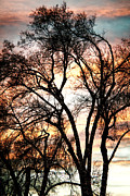 Photography Abstracts Prints - Colorful Silhouetted Trees 11 Print by James Bo Insogna