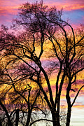 Photography Abstracts Framed Prints - Colorful Silhouetted Trees 13 Framed Print by James Bo Insogna