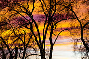 Photography Abstracts Prints - Colorful Silhouetted Trees 19 Print by James Bo Insogna