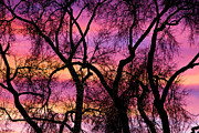 Photography Abstracts Prints - Colorful Silhouetted Trees 21 Print by James Bo Insogna