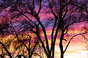 Photography Abstracts Prints - Colorful Silhouetted Trees 31 Print by James Bo Insogna