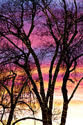 Photography Abstracts Framed Prints - Colorful Silhouetted Trees 33 Framed Print by James Bo Insogna