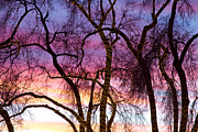 Photography Abstracts Prints - Colorful Silhouetted Trees 38 Print by James Bo Insogna
