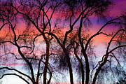 Photography Abstracts Framed Prints - Colorful Silhouetted Trees 9 Framed Print by James Bo Insogna