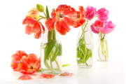 Glass Bottle Posters - Colorful spring tulips in old milk bottles Poster by Sandra Cunningham