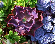Bromeliads Glass - Colorful Succulents by Nancy Mueller