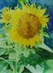 K Joann Russell Art - Colorful Sunflowers Watercolor Original Sunflower Art by K Joann Russell