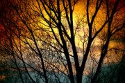 Tree Art Print Framed Prints - Colorful Sunset Silhouette Framed Print by James Bo Insogna