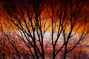 Sunset Greeting Cards Prints - Colorful Tree Branches Print by James Bo Insogna