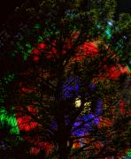 Lightning Decorations Photo Prints - Colorful Tree Print by James Bo Insogna