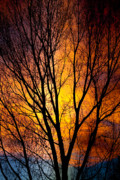 Sunset Greeting Cards Prints - Colorful Tree Silhouettes Print by James Bo Insogna