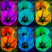 Stock Images Prints - Colorful Tulip Collage Print by James Bo Insogna