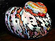 Sea Shell Originals - Colorful Turbo On Wood Floor by Tracy Effinger
