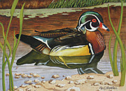 Colorful Wood Duck Print by Phil Hopkins