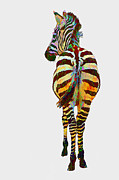 Isolated Mixed Media Acrylic Prints - Colorful Zebra Acrylic Print by Teresa Zieba