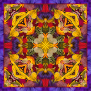 Mandalas Framed Prints - Colorific Framed Print by Bell And Todd