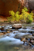 Zion National Park Posters - Colors in the Narrows of Zion Poster by Pierre Leclerc