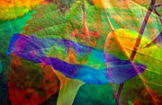 Abstract Realism Photos - Colors of Autumn by Shirley Sirois